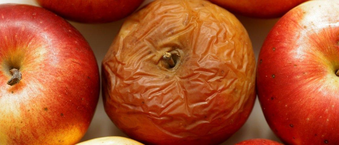 Mito ou verdade: basta uma maçã podre para estragar todas as outras?
