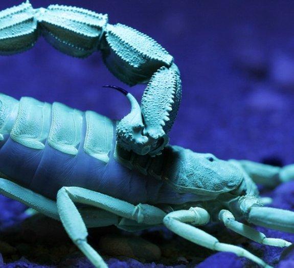 Sabia que escorpiões podem não ser tão perigosos como se imagina?
