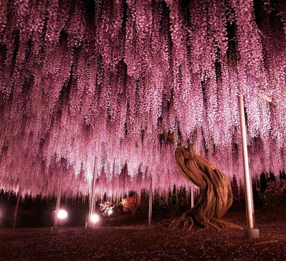 As 17 árvores mais incríveis do mundo [galeria]