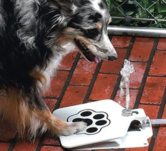 Conheça 20 objetos muito interessantes (e engraçados) para o seu cachorro