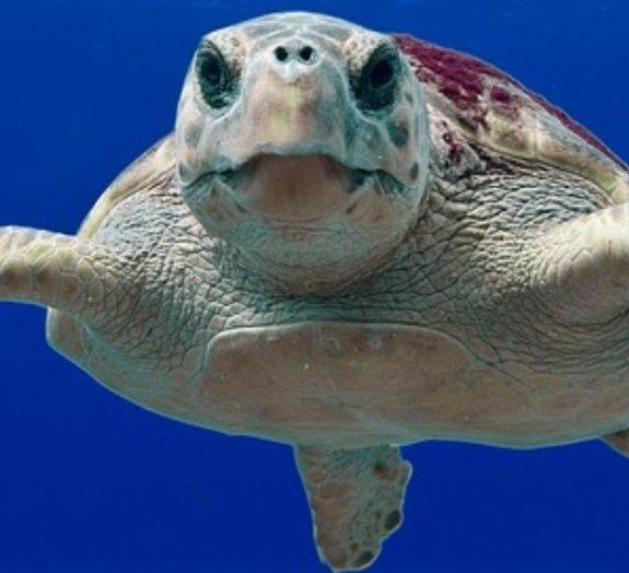 Pequeno manual das tartarugas: 13 fatos incríveis e 9 espécies diferentes