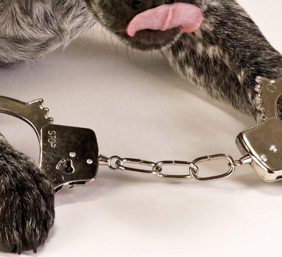 Você sabia que um cão já foi condenado à prisão perpétua nos EUA?