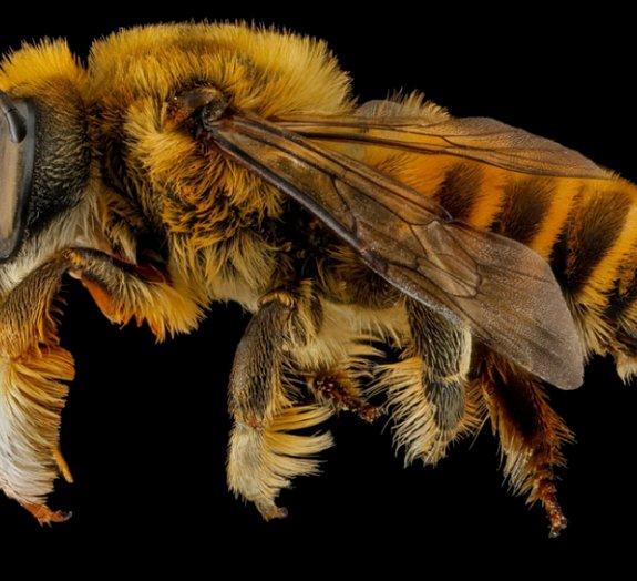 Macrofotografias revelam o incrível visual das abelhas [galeria]