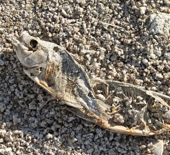 Conheça a região de Salton Sea, o paraíso que virou uma terra devastada