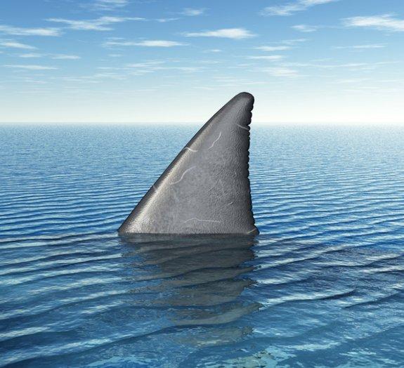 Conheça a história do pior ataque de tubarões de todos os tempos