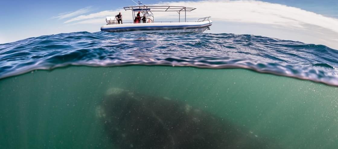 25 imagens surpreendentes que revelam o que existe sob as águas