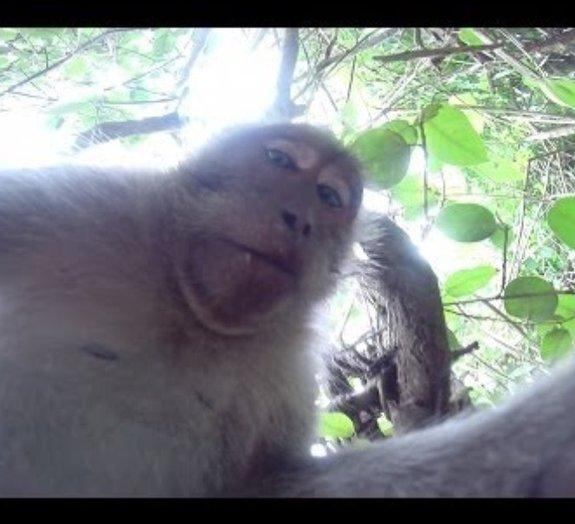 Mundo animal: macaco encontra câmera e tira foto de si mesmo