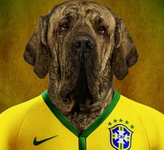 Veja adorável time de cães vestindo as camisas de futebol de seus países