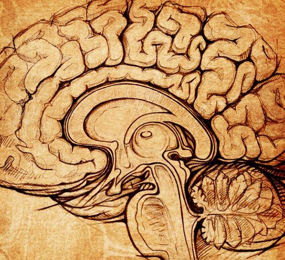 Novidade! Cientistas encontram semelhanças no cérebro de crianças autistas