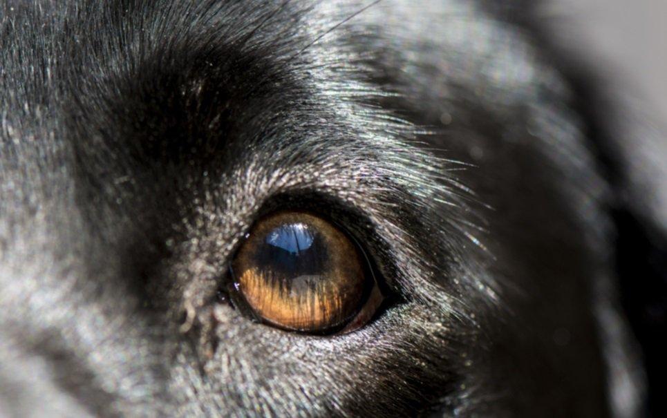 10 raças de cães que não existem mais