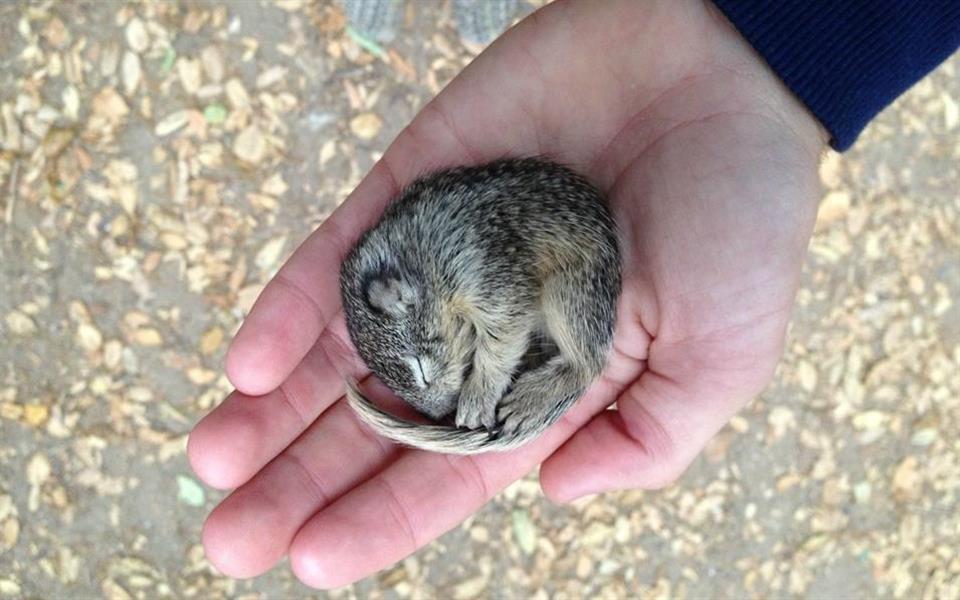 Fé na humanidade: veja a recuperação desse esquilinho encontrado congelando - Mega Curioso