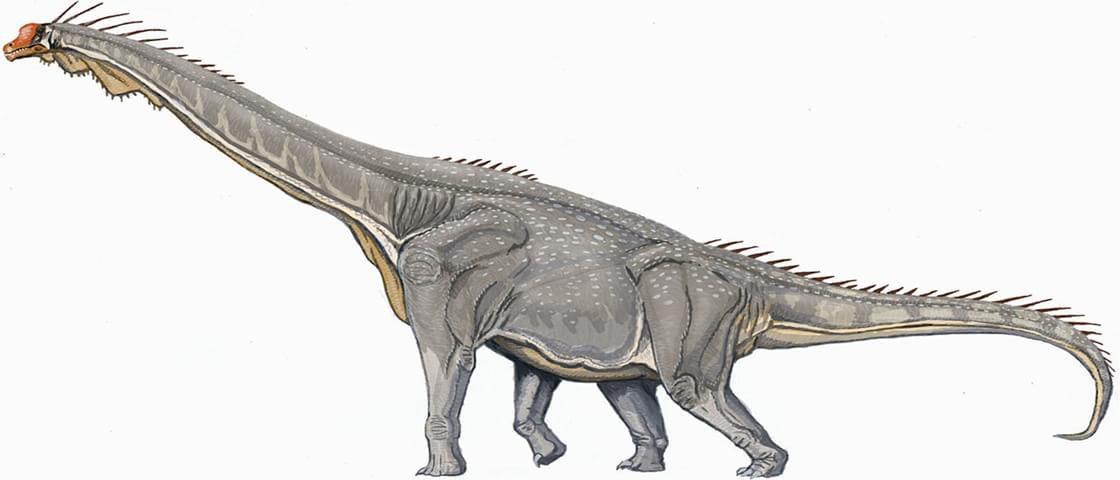 Conheça o braquiossauro, o dinossauro-girafa