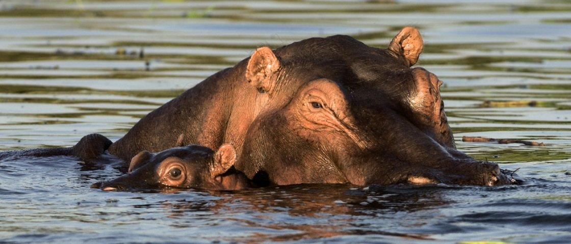 5 animais vegetarianos que gostam muito de uma carnificina