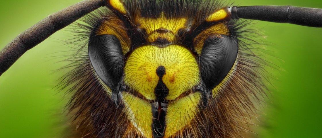 Você sabia que insetos também sofrem por causa do stress?