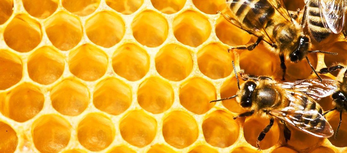 Você sabe por que é que o mel — quase — nunca estraga?