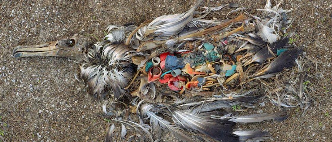 Estas 19 imagens vão fazer você repensar sua postura sobre o meio ambiente