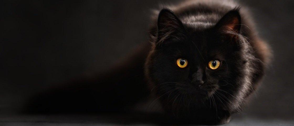 Cientistas debatem se os gatos realmente são animais domesticados