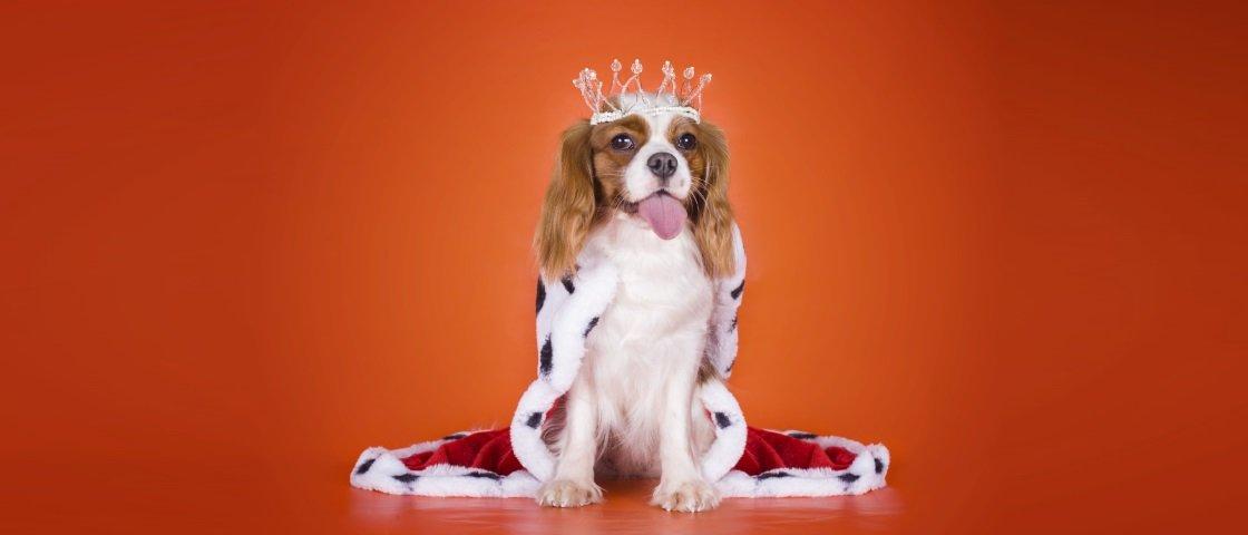 Conheça 7 animais de estimação muito mais ricos do que você