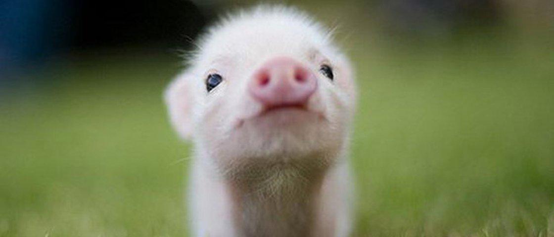 19 imagens de animais fofos que vão aquecer o seu coração