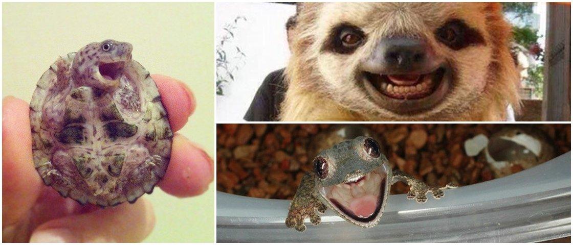 Mostrando os dentes: os animais realmente sorriem?