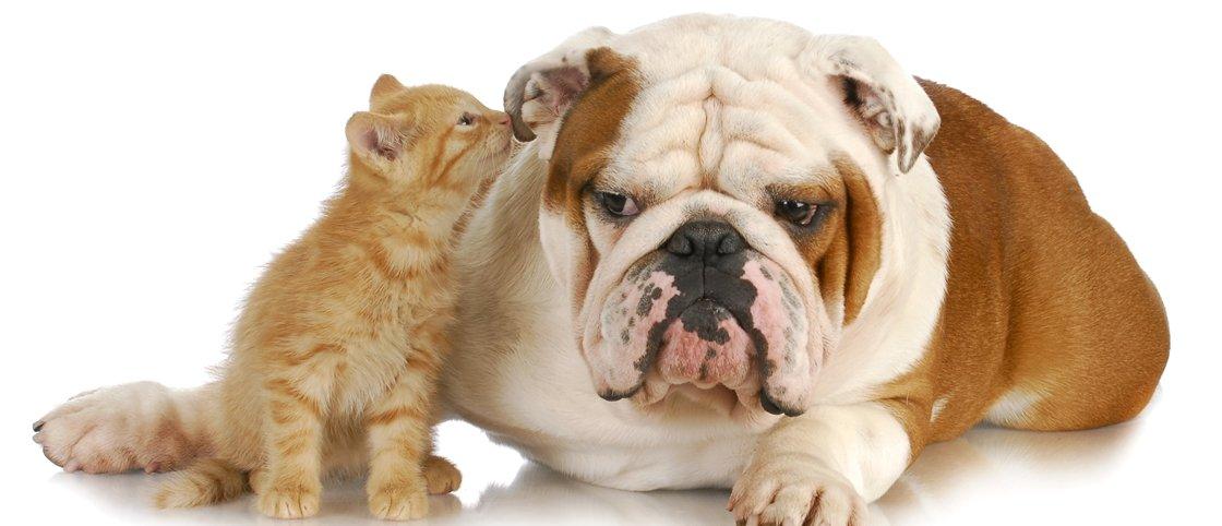 7 casos de animais que adotaram filhotes de outras espécies