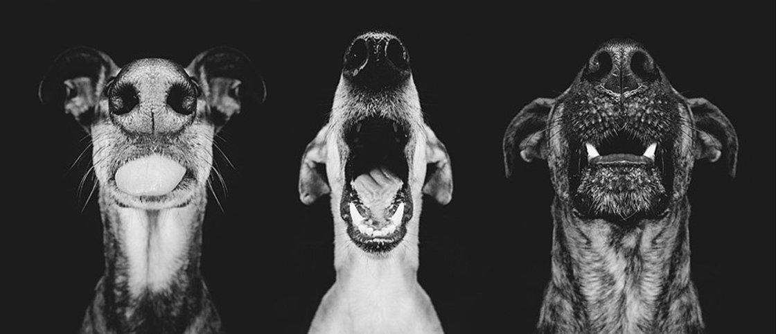 Fotos mostram as expressões caninas nos mínimos detalhes