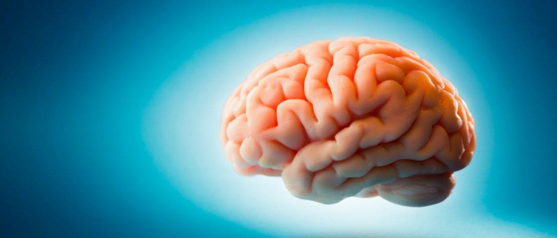Pela primeira vez, cientistas criam cérebro humano em laboratório