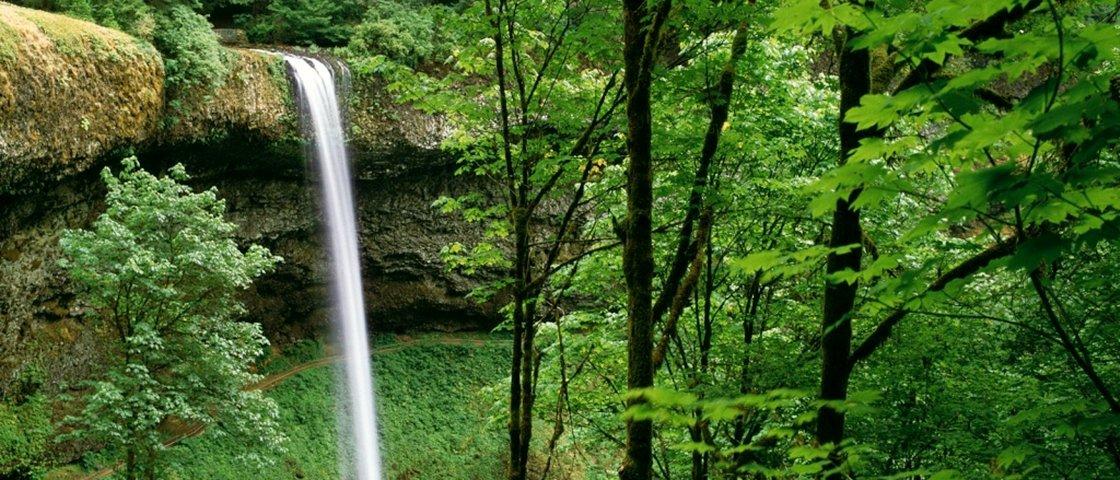 13 florestas incríveis que parecem ter saído dos contos de fada