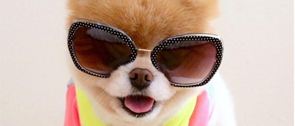 12 animais que se vestem melhor que muita gente por aí