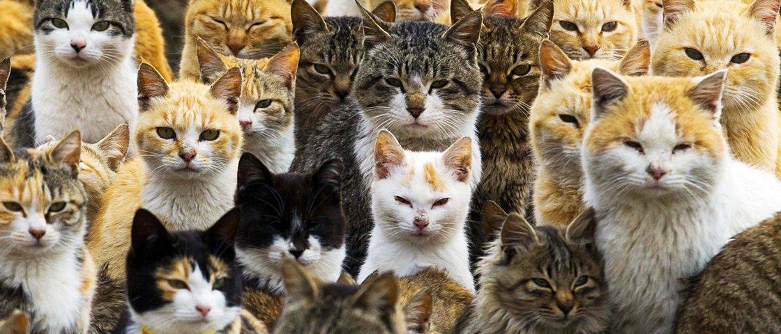 Será que você encontra o gato nestas 7 imagens?
