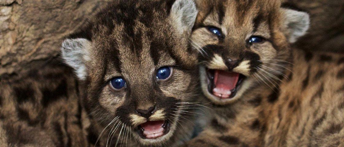 Fofura pura: 13 graciosos filhotes de animais tomando mamadeira