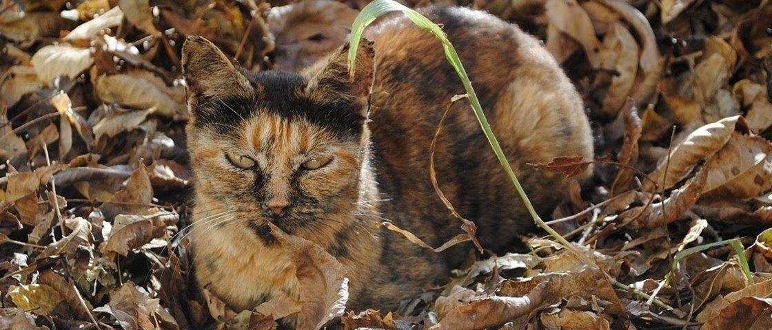 15 gatos camuflados que são mestres na arte de se esconder