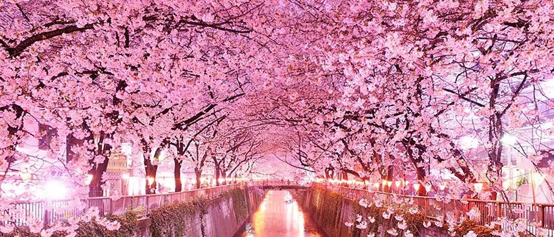 11 fotos mostram por que o Japão fica ainda mais bonito na primavera