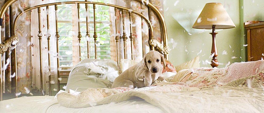Para cães: 8 passos para renovar a decoração quando seu dono sai de casa