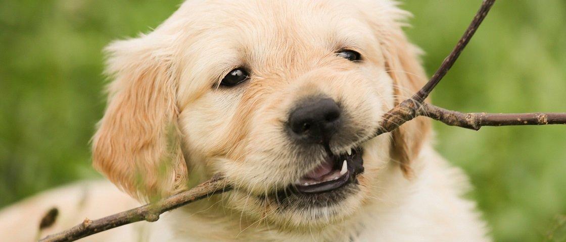 Saiba quais raças de cachorro se dão melhor com as crianças