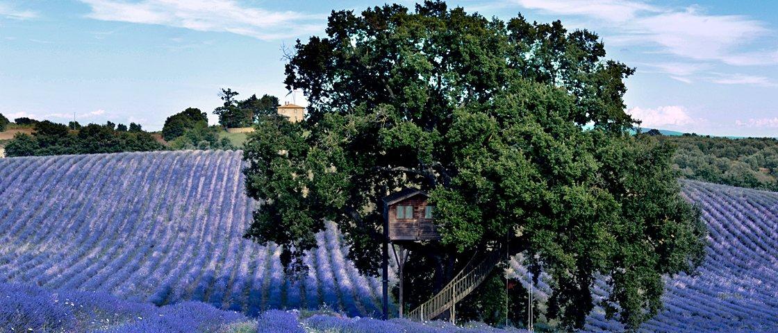 13 razões pelas quais você vai querer morar nesta casa na árvore