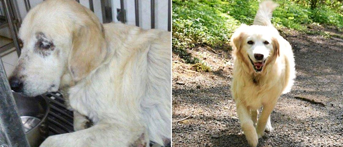 Antes e depois: veja o que aconteceu com estes 13 cães após serem adotados