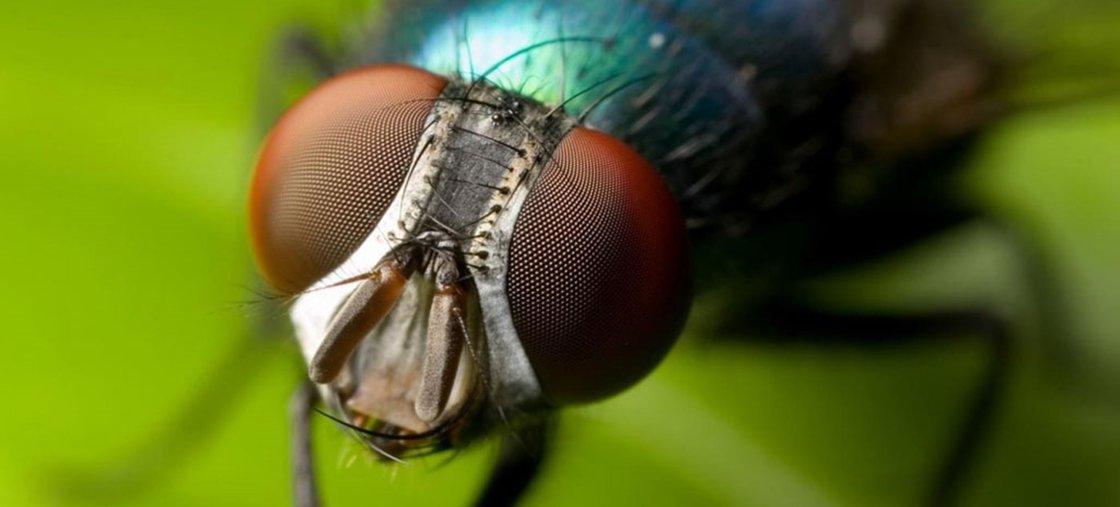 Mulher faz xixi com larvas por 3 meses até descobrir infestação na bexiga