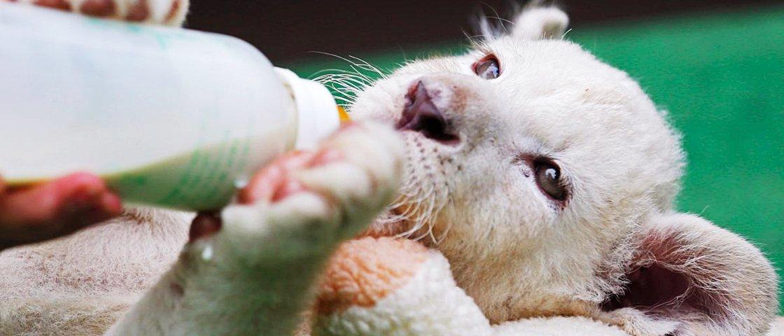 Estes 13 filhotes de animais vão arrancar um sorriso seu instantaneamente