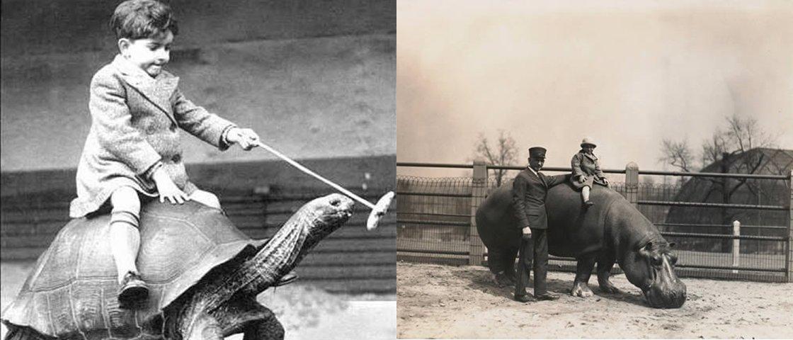 7 fotos bizarras de pessoas montadas em animais