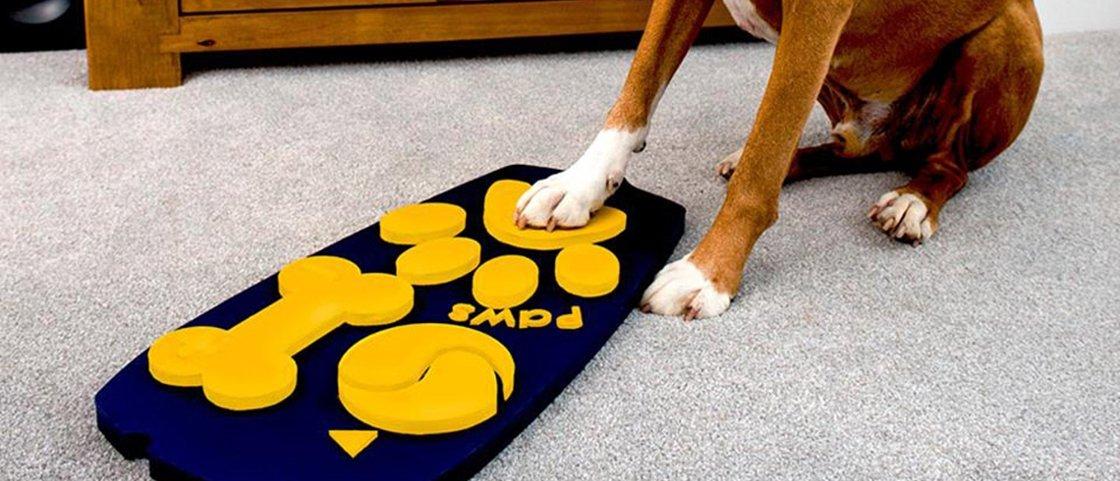Controle remoto para cães permite que eles comandem a TV