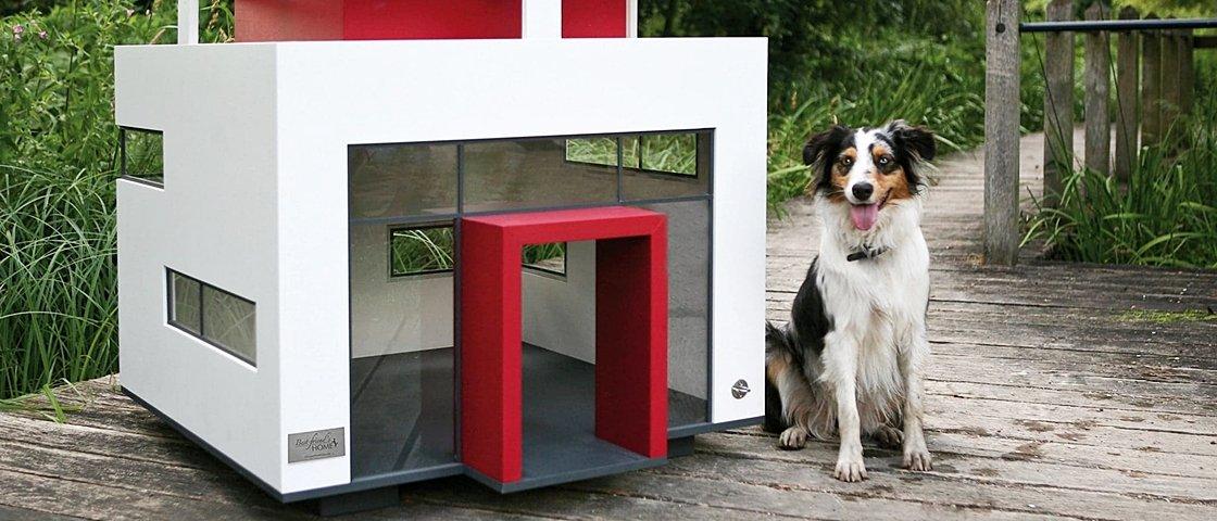 Casinhas, nada: estes 12 cães moram muito melhor do que você