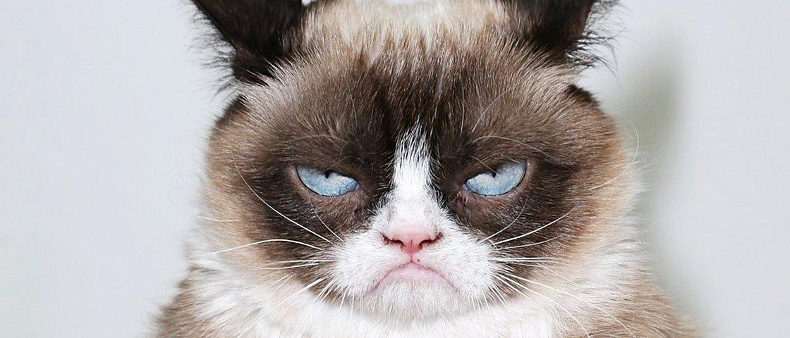 15 GIFs que ilustram a desastrada e difícil vida dos gatos