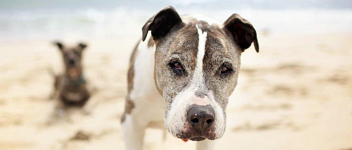 As histórias destes 13 cães idosos vão emocionar você