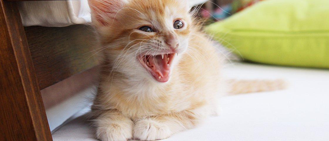 17 coisas que só quem tem um gato é capaz de entender