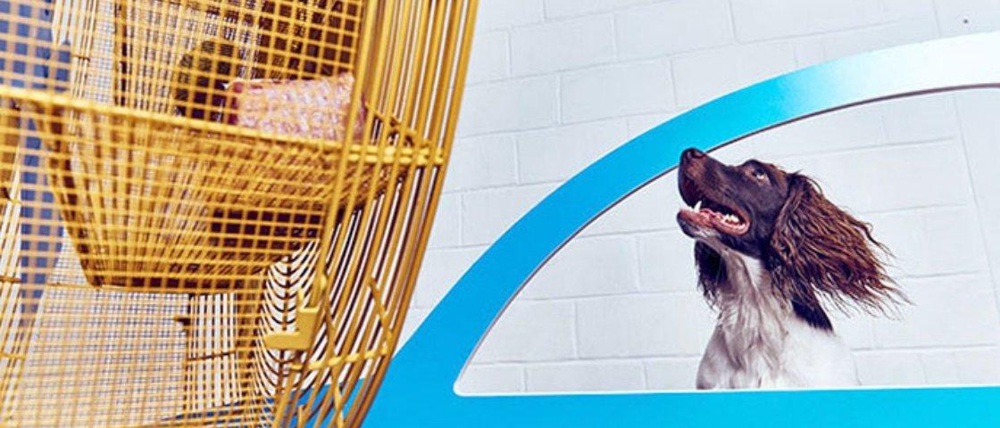 Primeira do mundo: esta galeria de arte para cães é simplesmente incrível