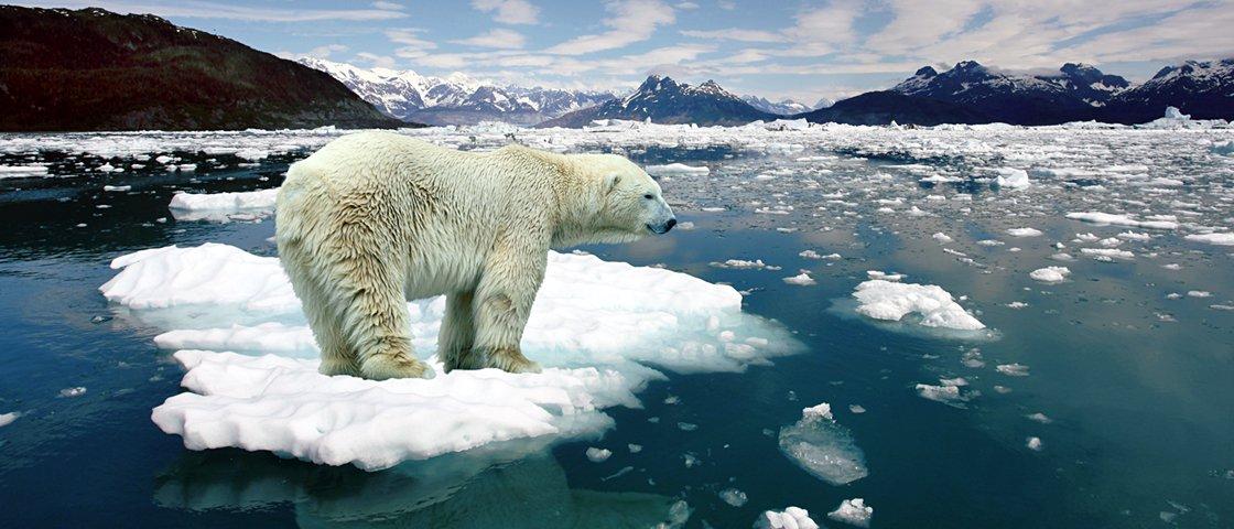 7 animais que podem sumir do mapa nos próximos anos se nada for feito