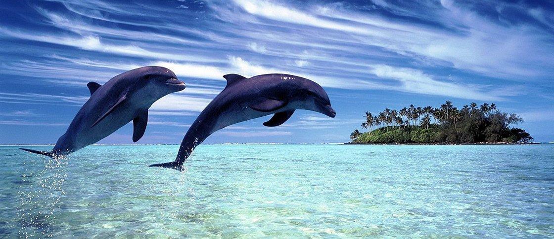 Golfinhos falam com os outros com frases completas, dizem pesquisadores