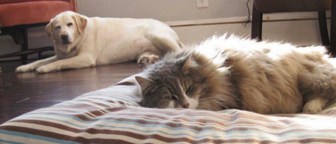 11 vezes em que os cachorros foram dominados pelos gatos