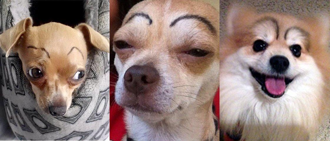 12 cachorros com sobrancelhas para divertir o seu dia